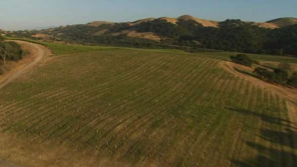 Helicopter aerial of a vineyard in the Santa Maria Valley California. Royalty-free stock video