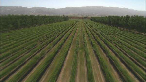 Helicopter aerial of a vineyard in the Salinas Valley California. Royalty-free stock video