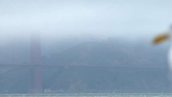 A seagull  surveys the Golden Gate Bridge obscured by fog in the background. Royalty-free stock video