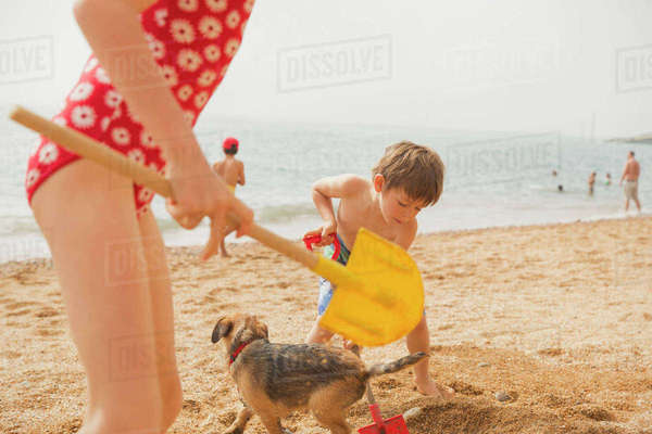 Boy and girl brother and sister playing with dog and digging in sand with shovels on sunny beach Royalty-free stock photo
