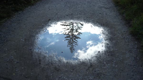 Close-up shot of pine tree reflection in a puddle Royalty-free stock video