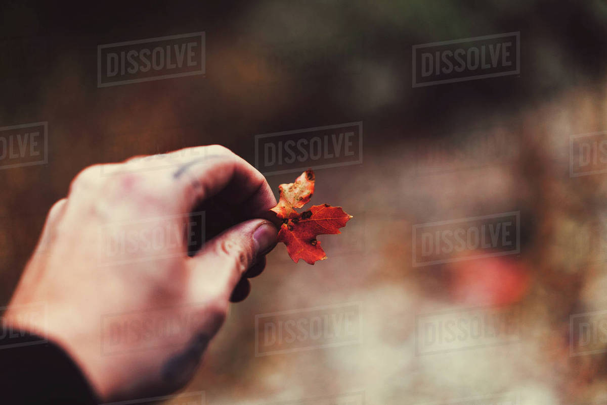 Hand with tattoo holding autumn leaf Royalty-free stock photo