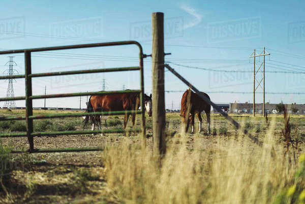 Horses looking at camera from behind fence Royalty-free stock photo