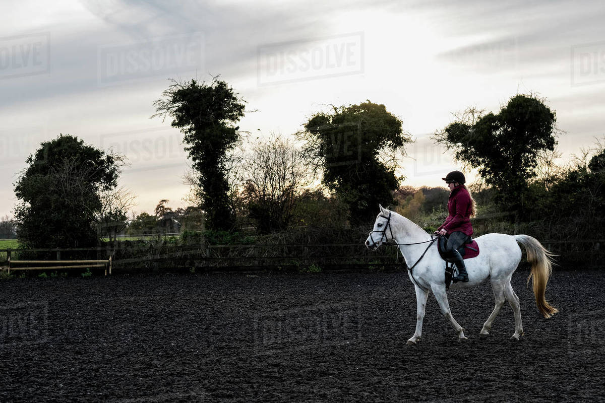 Young woman riding on white Cob horse in paddock. Royalty-free stock photo