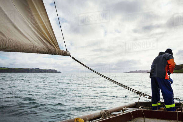Traditional Sustainable Oyster Fishing, a fisherman on a sailing boat in the Fal Estuary.  Royalty-free stock photo
