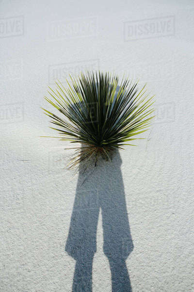 Photographer's self portrait and shadow on sand dune and yucca, White Sands National Park Royalty-free stock photo