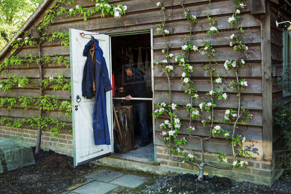 A garden shed workshop with plants trained up the outside, flowering. View through the open door of a man at work.  Royalty-free stock photo