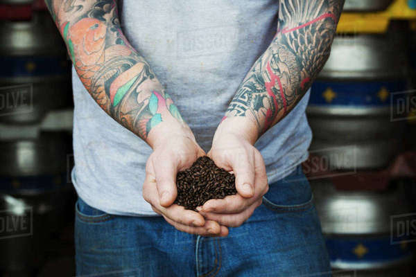 Close-up of man standing in a brewery, holding some dark brown malt, tattooed arms. Royalty-free stock photo
