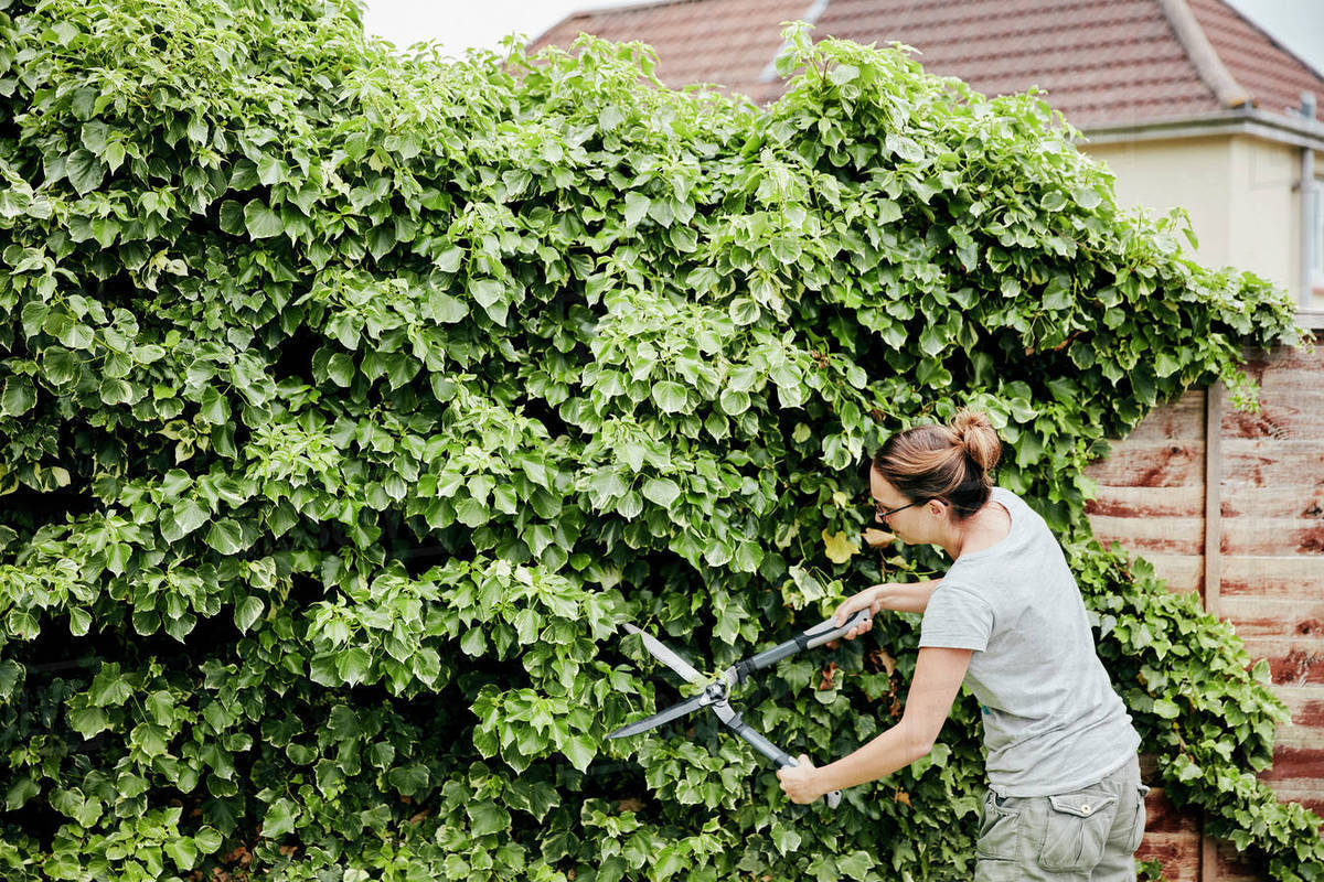 A Woman Using Shears To Cut Back A Climbing Plant Growing Up Over