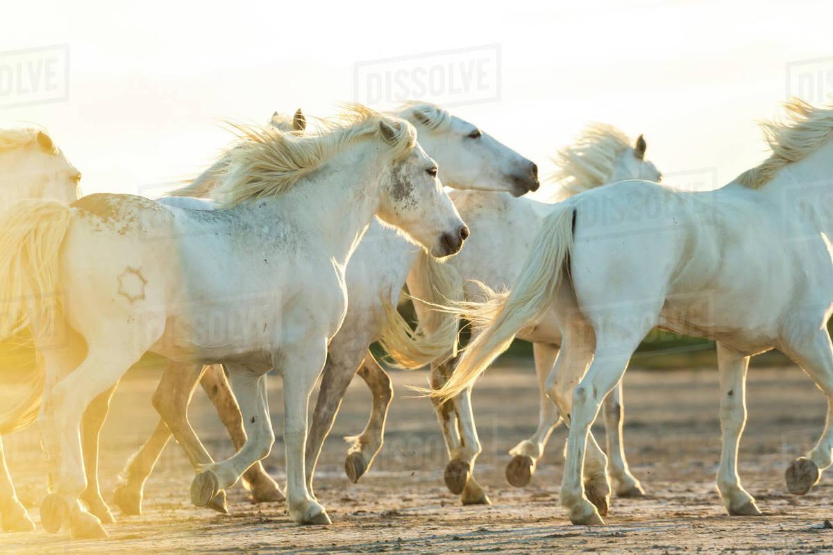 The White Horses dekbedovertrek - 100% katoen - Smulderstextiel.nl | 800x1200