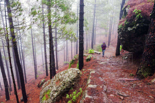 Spain, Canary Islands, Gran Canaria, Trail to Roque Nublo, Mid adult woman hiking in misty forest Royalty-free stock photo