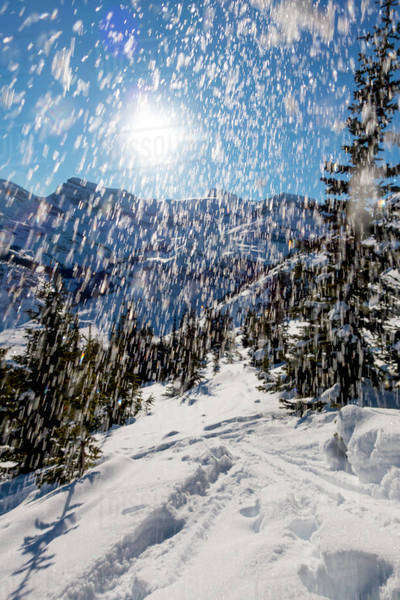 Fresh snow thrown in the air on an alpine day. Royalty-free stock photo