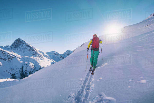 Female ski adventurer ascends a skin track in the alpine on a bluebird day. Royalty-free stock photo