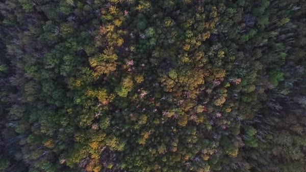 Aerial shot moving over trees Royalty-free stock video