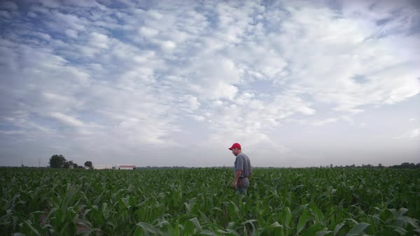 Lockdown shot of farmer walking in farm against cloudy sky Royalty-free stock video