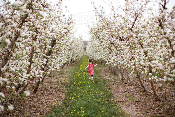 Rear view of girl holding flower while walking on grassy field amidst cherry trees Royalty-free stock photo