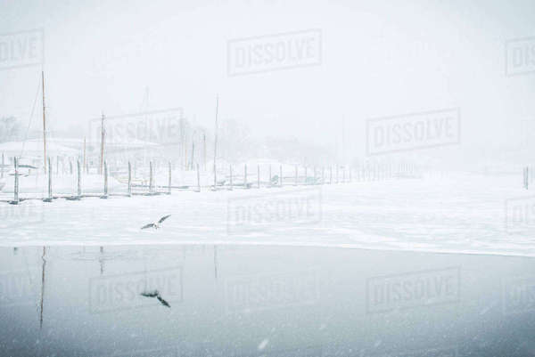 Bird flying over frozen lake during snowfall Royalty-free stock photo