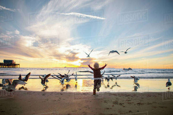 Rear view of girl playing with seagulls at beach against sky during sunset Royalty-free stock photo