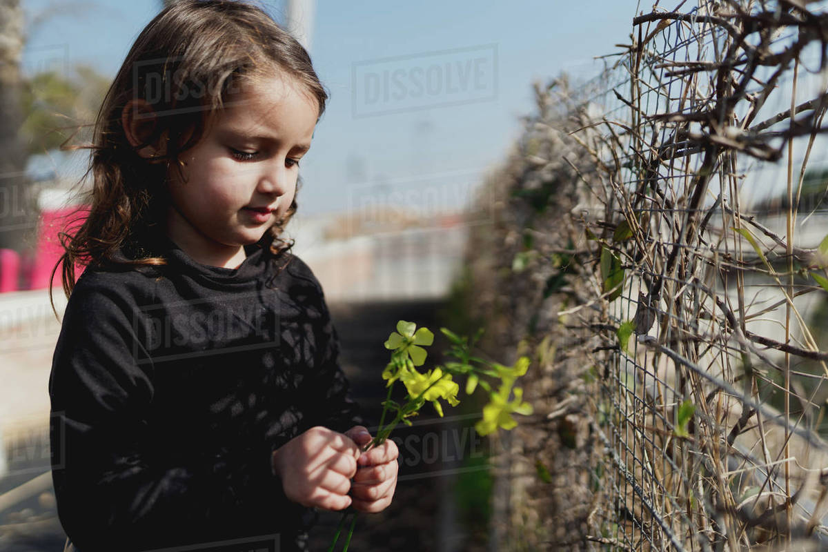 Adorable four-year-old girl looking at the yellow flowers in her hand. Royalty-free stock photo
