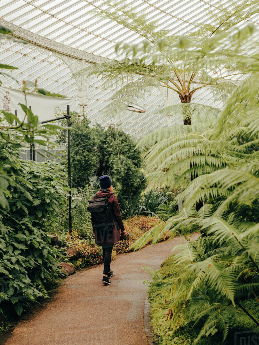 Woman wandering through Kibble Palace Botanic Gardens Royalty-free stock photo