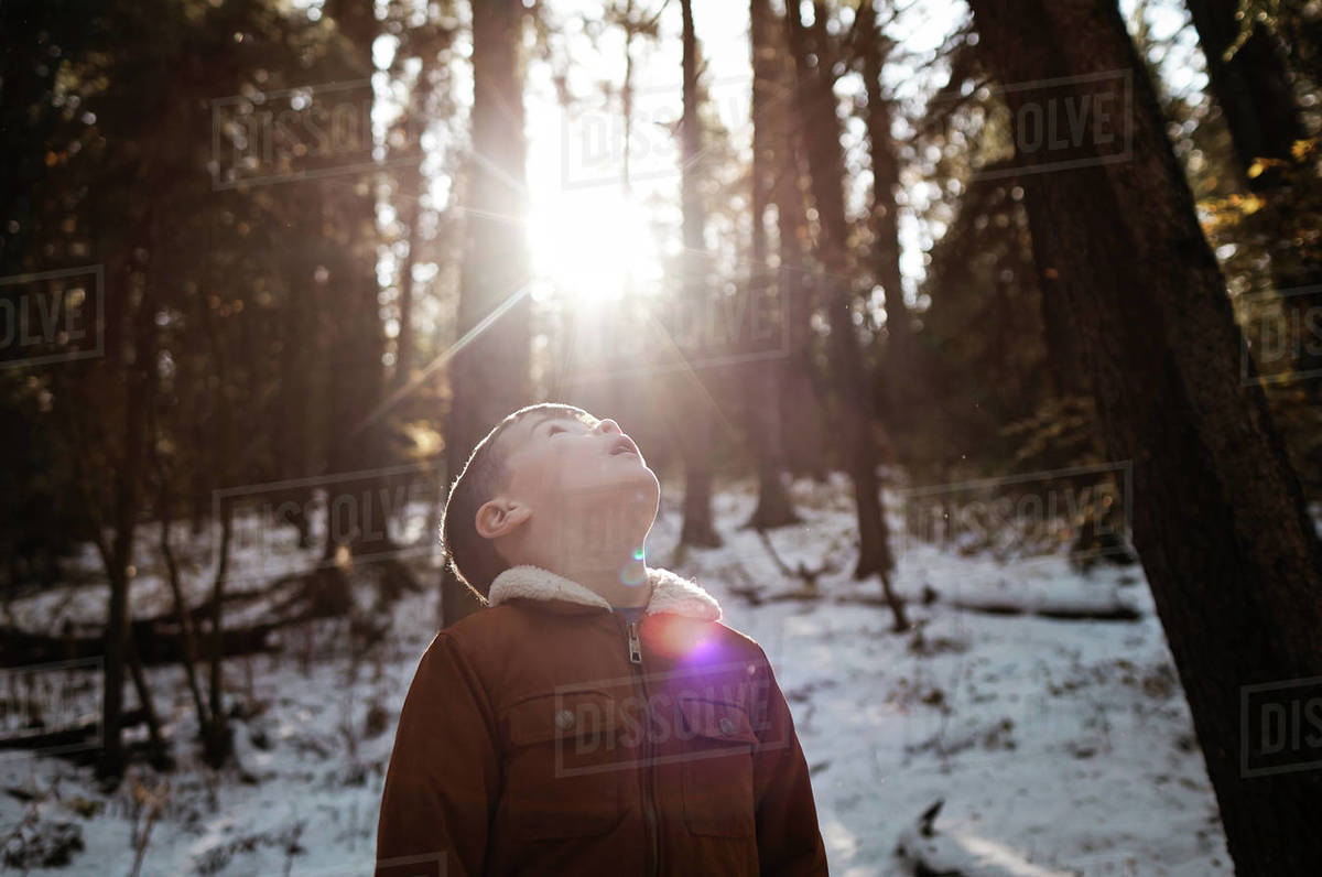 Young boy in forest looking up at the sun in the winter Royalty-free stock photo