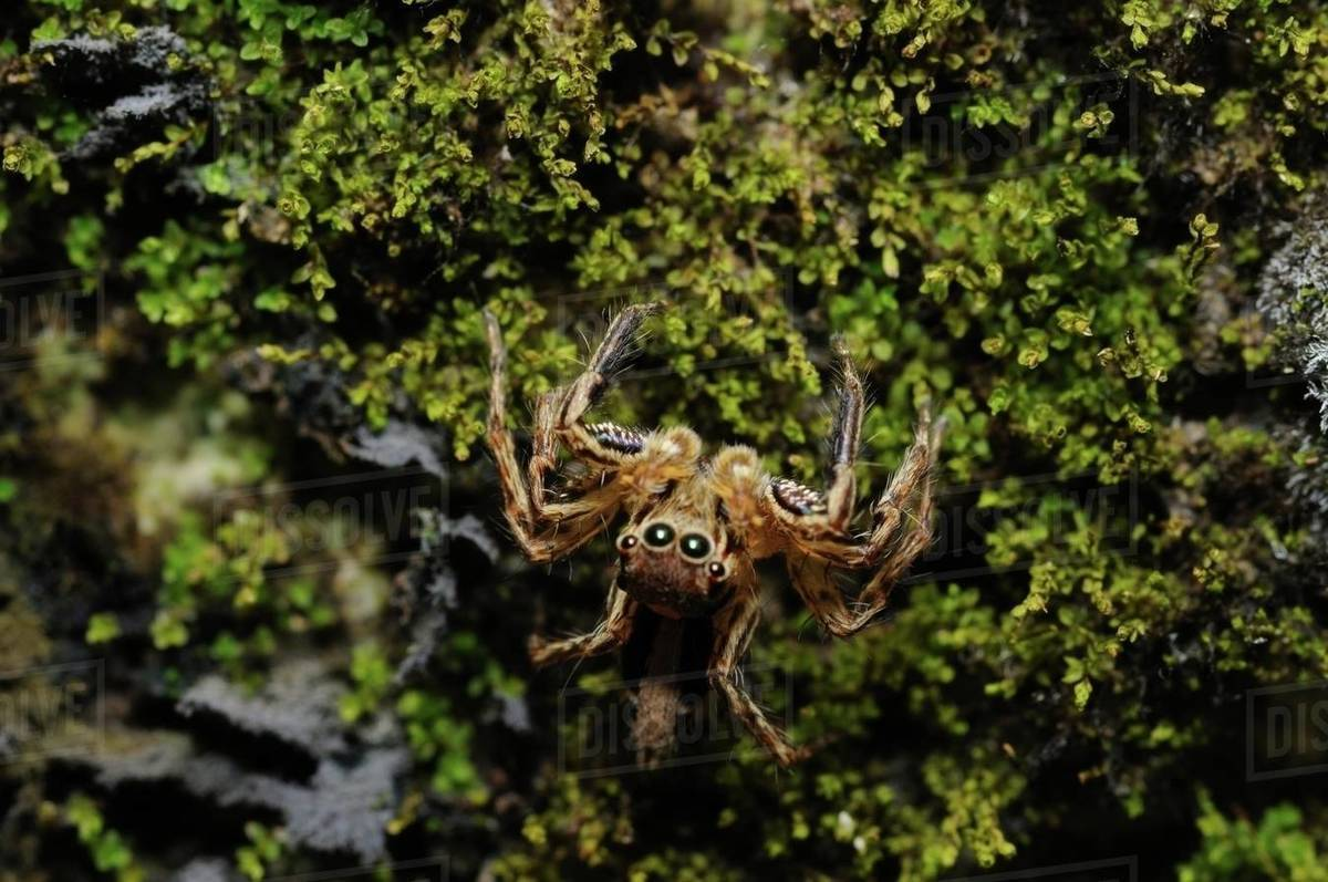 Curious Spider Looking At the Lens Royalty-free stock photo