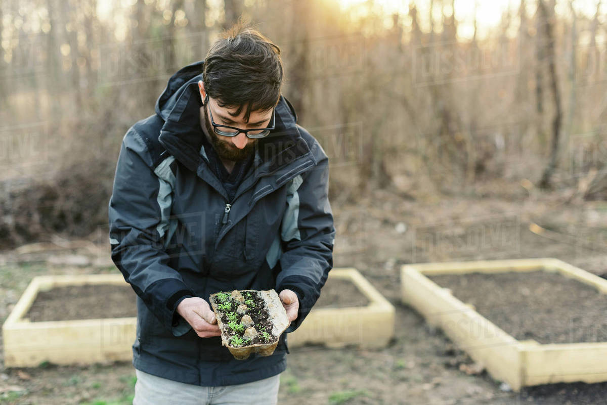 A man planting seedlings in early spring. Royalty-free stock photo