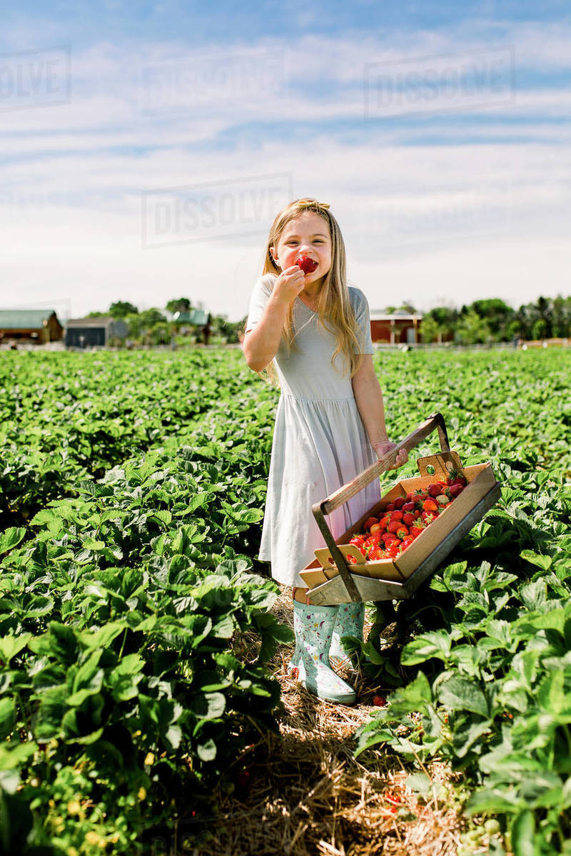 Smiling girl eating a strawberry in a strawberry field Royalty-free stock photo