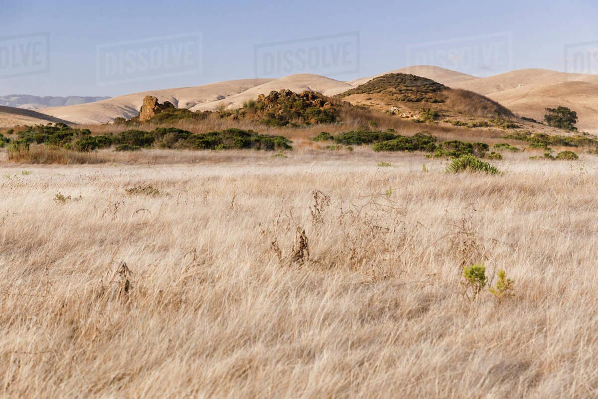 Dry grasslands on the California coast Royalty-free stock photo
