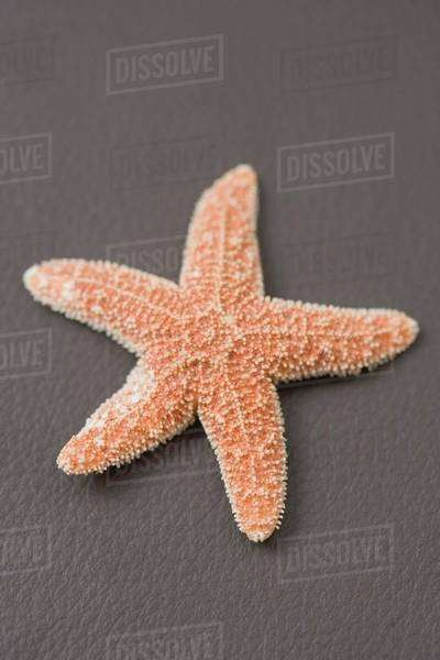 A starfish on brown (coloured background) Royalty-free stock photo