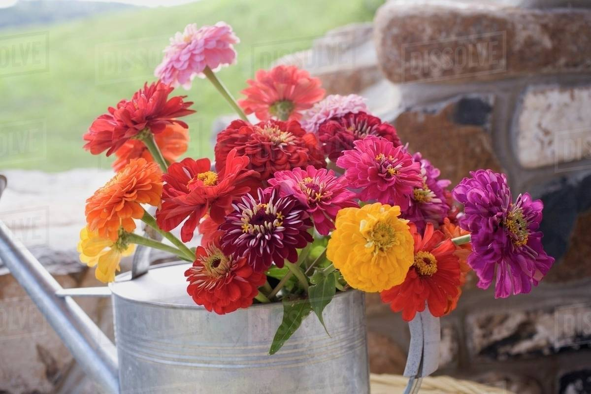 Summer Flowers In Watering Can