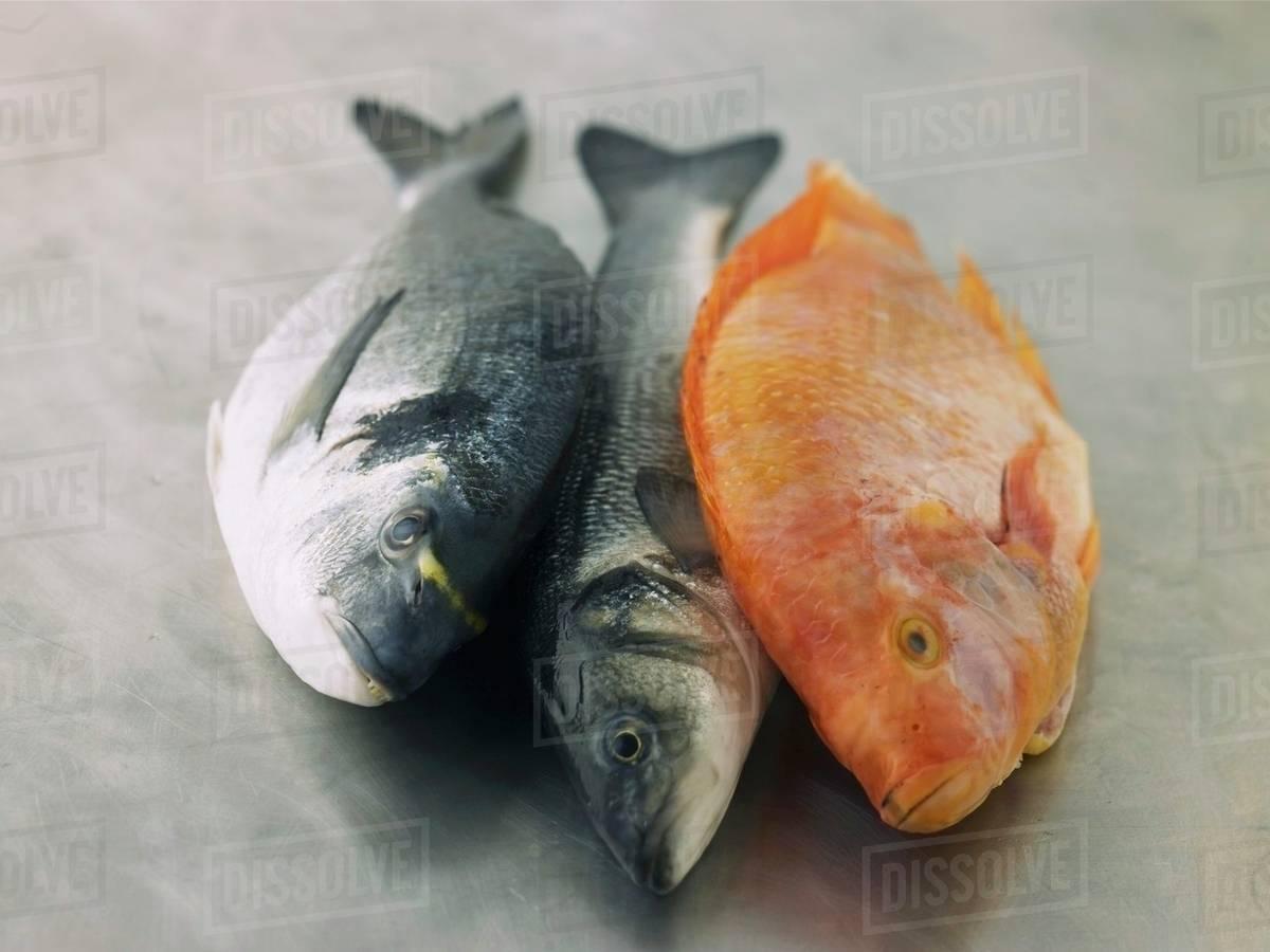 sea bass vs sea bream nutrition  nutrition pics