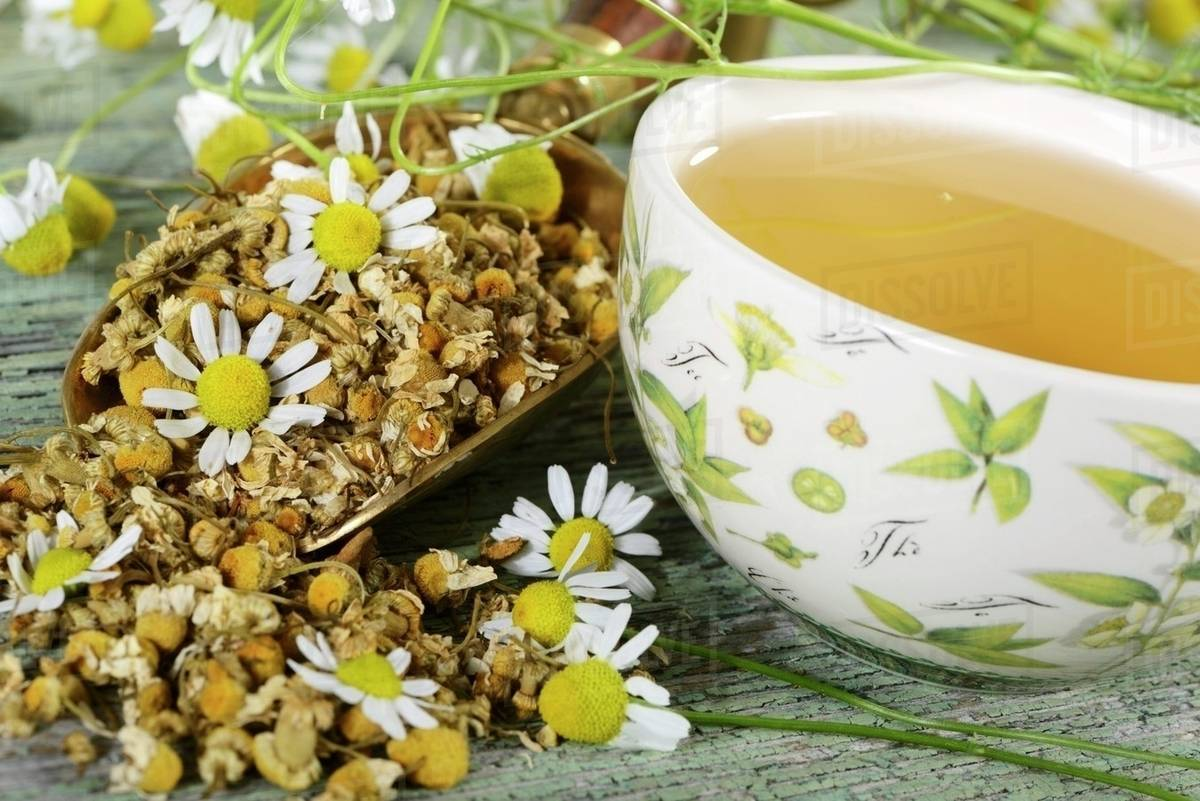 A Cup Of Chamomile Tea With Flowers D1062 77 933