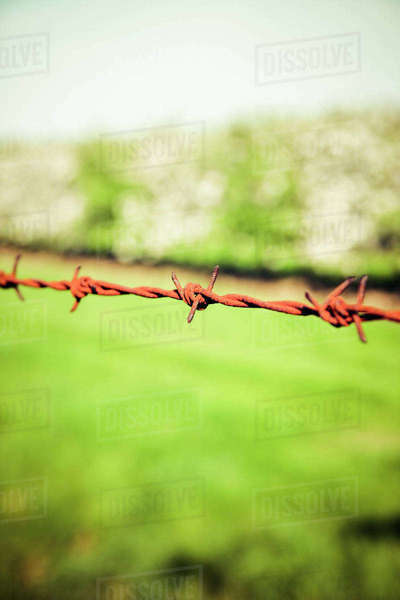 Germany, Barbed wire Rights-managed stock photo