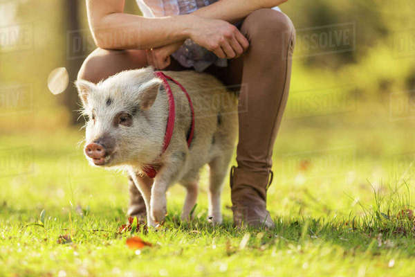 Piglet and woman in park Rights-managed stock photo
