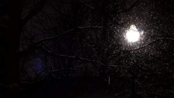 Snow flakes falling in front of light behind branches of tree. Royalty-free stock video