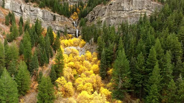 Flying backwards viewing Fall colors in green forest in Provo Canyon. Royalty-free stock video