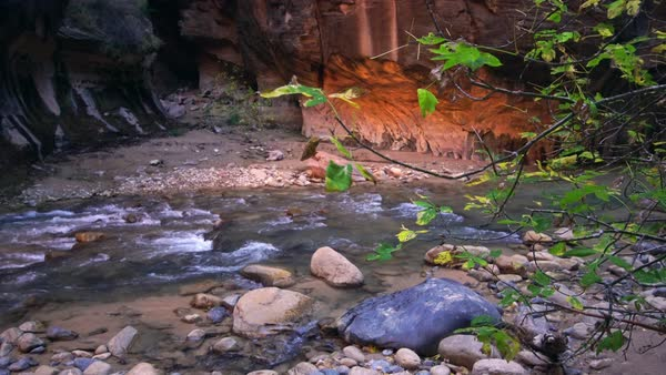 Leaves blowing in the breeze in the Narrows of Zion National Park Royalty-free stock video