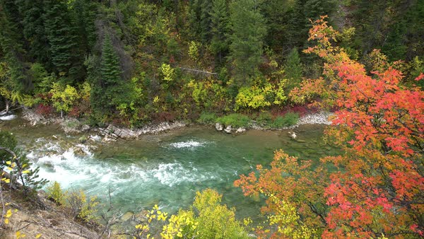 Grey's River flowing along riverbank decorated in colorful fall foliage Royalty-free stock video