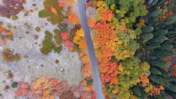 Aerial view looking down at colorful forest during Autumn following road through forest. Royalty-free stock video