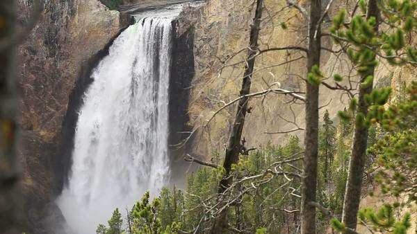 View through the Trees of Lower Yellowstone Falls Royalty-free stock video