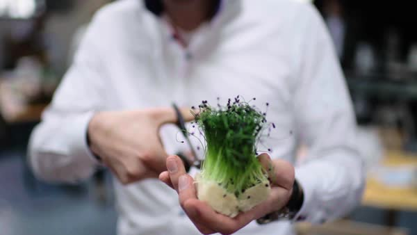 Medium close-up shot of chef cutting microgreens Royalty-free stock video