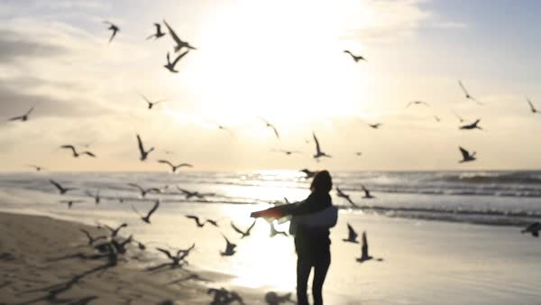 Medium wide shot of a woman feeding birds on the shore Royalty-free stock video
