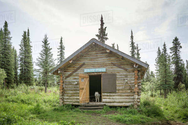 Viking Lodge Public Use Cabin Wrangell St. Elias National Park And Preserve  Royalty
