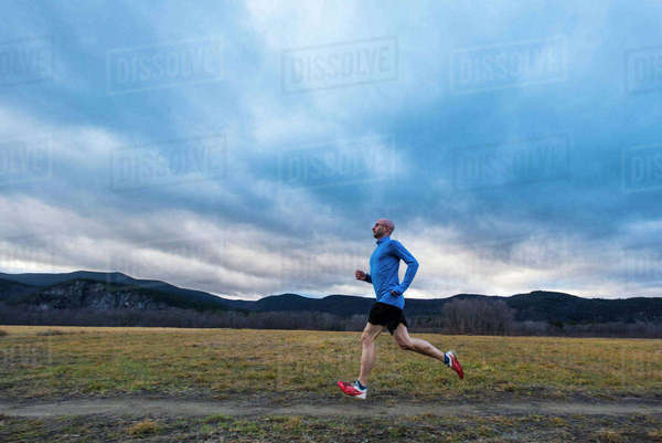 Runner in a golden field of alfalfa  Royalty-free stock photo