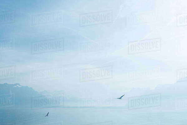 Birds flying over lake Royalty-free stock photo