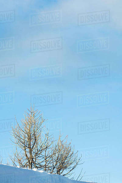 Bare trees in snow, low angle view Royalty-free stock photo