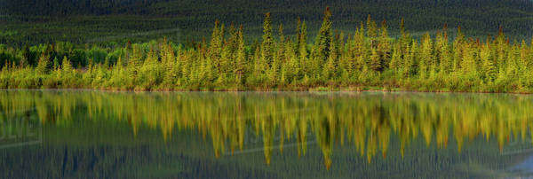 Forest reflected in a calm lake Royalty-free stock photo