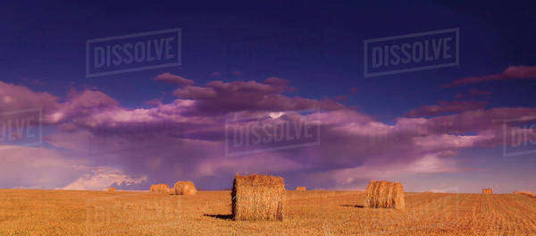 Hay bales in a field with storm clouds overhead Royalty-free stock photo