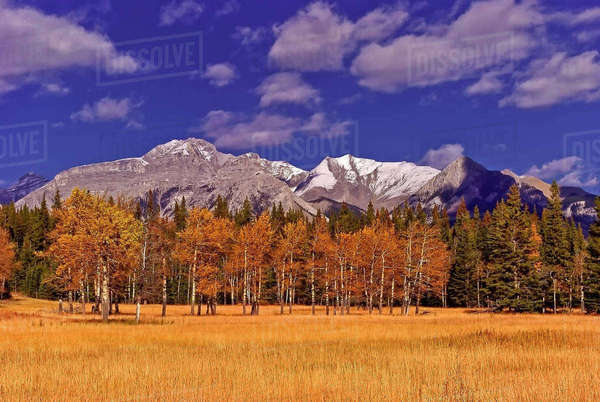 Panoramic shot of Fairholme Mountain Range in Banff, Alberta Canada taken in the fall. Royalty-free stock photo